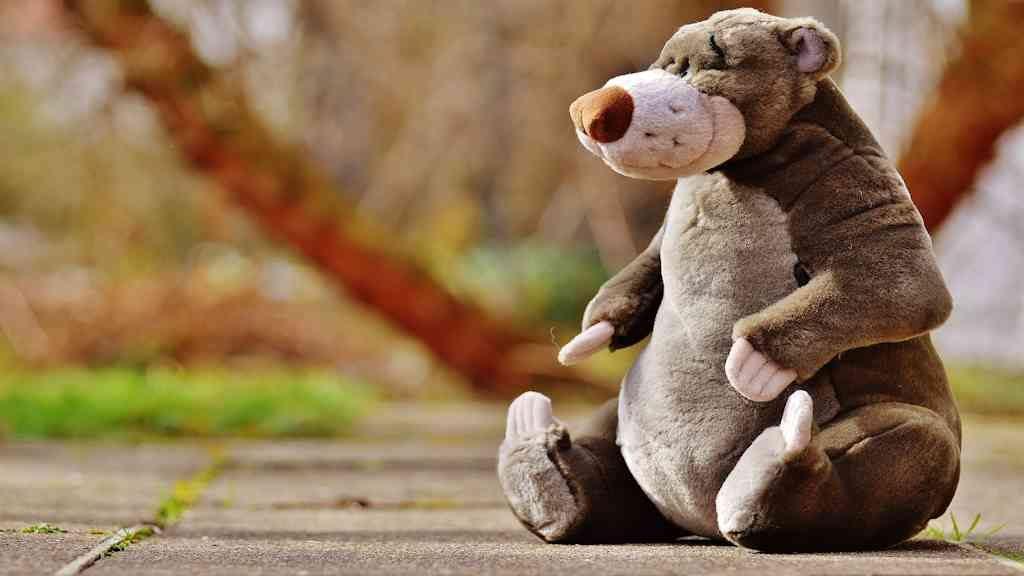 bear-picnics-moulton